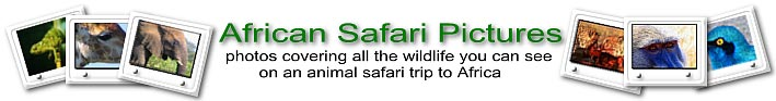 African safari Pictures
